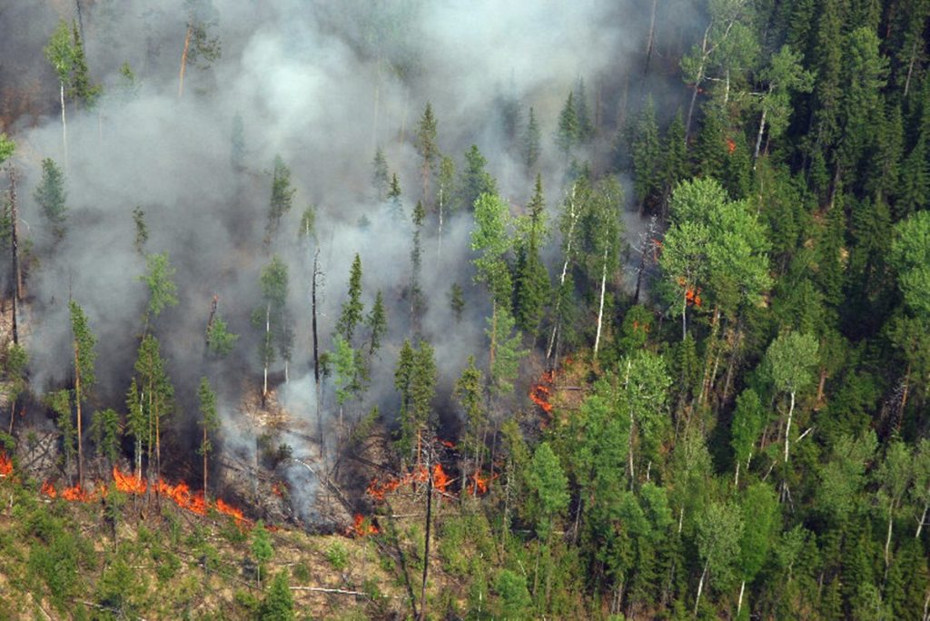ВНИМАНИЕ! Лесные пожары!
